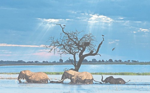The cruise that thinks it's a safari: a refreshing way to see Africa's wildlife