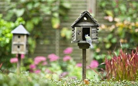 Why you need a bird house (or two) in your garden – and which ones to buy