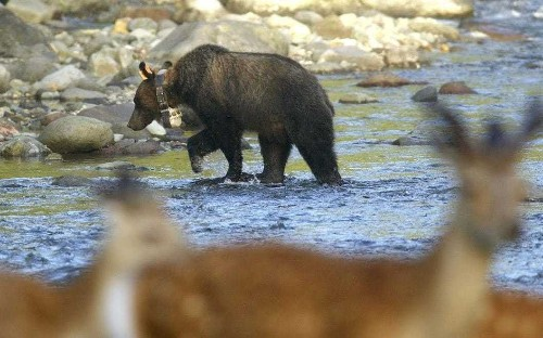 Parents left seven-year-old son in bear-infested woods as punishment, say Japanese police
