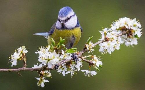 The Big Garden Birdwatch is back, 40 years and still flying high