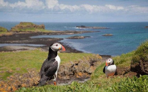 The best places to see wildlife in the UK
