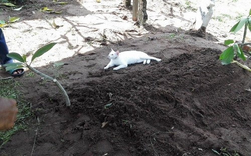 Cat appears during funeral and 'refuses' to leave man's grave