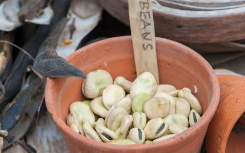 How to save seed: select the best plants for improved performance