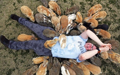 Land of the rising bunny: Rabbits take over Japanese island, in pictures - Telegraph