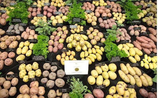Potatoes can help cut cancer risk