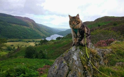 'Cat on lead' trend is causing pets distress, RSPCA warns