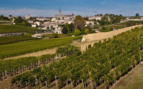 French wine scientists create 'supergrapes' that do not require pesticides