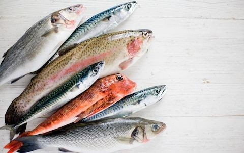 Farmed or wild? Fresh or frozen? The ultimate guide to the healthiest fish