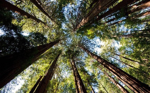 Redwood National Park, California: tall tales from the trees