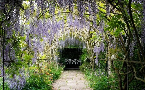 Top 10 gardens to see wisteria in bloom - Telegraph