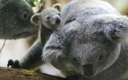 Adelaide and South Australia: wildlife