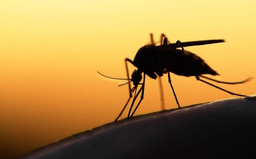 Zika: the latest advice for travellers
