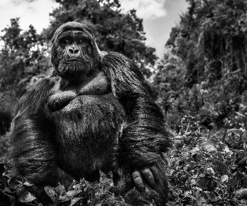 10 stunning shots by wildlife photographer David Yarrow – and how he captured them