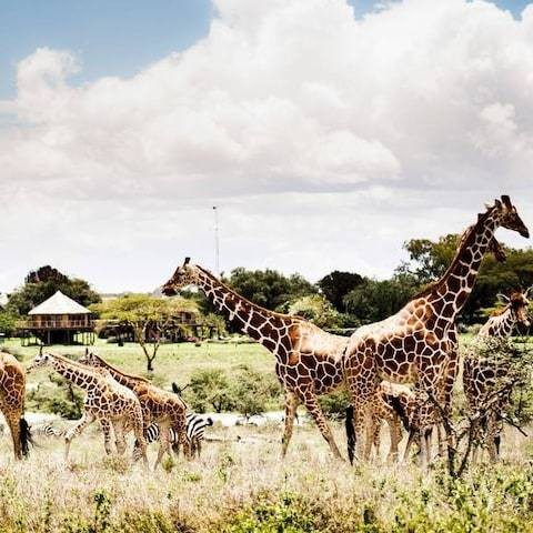 Luxury African safaris: the 10 best