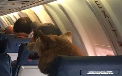 Dog sitting casually on a plane is the perfect in-flight entertainment