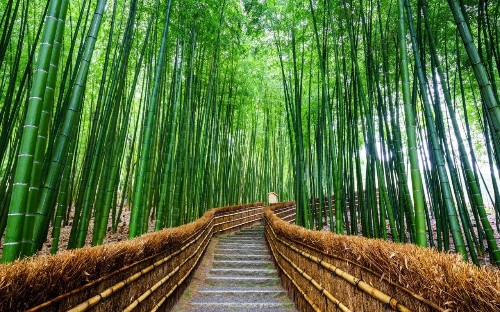 Nakasendo Way, Japan: In the footsteps of the ancients
