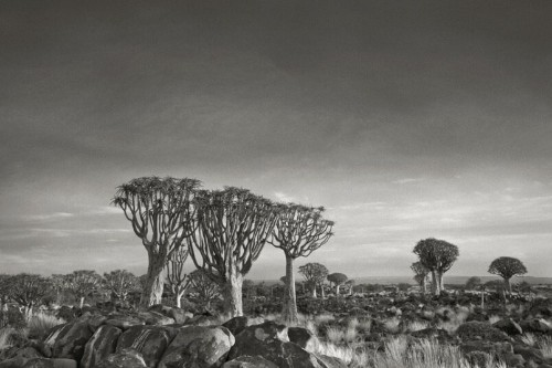 Ancient Trees: Portraits of Time by photographer Beth Moon - Telegraph