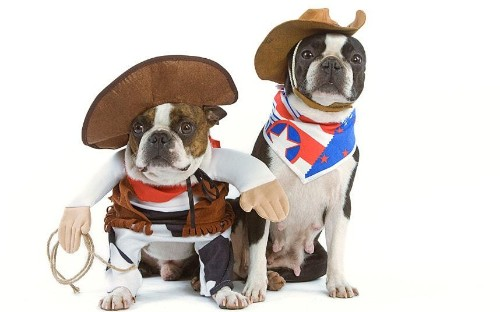 Dogs, cats, rabbits and piglets dressed up in costumes for Dress Up Your Pet Day - Telegraph