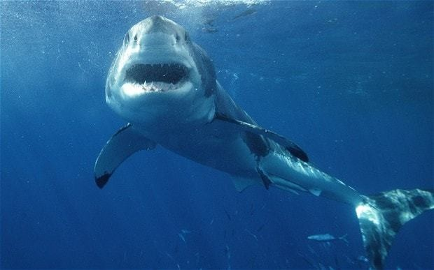 Unprecedented wave of shark attacks causes terror in North Carolina