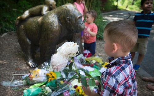 Celebrities joins backlash over shooting of Harambe the gorilla - but Ohio zoo defends decision