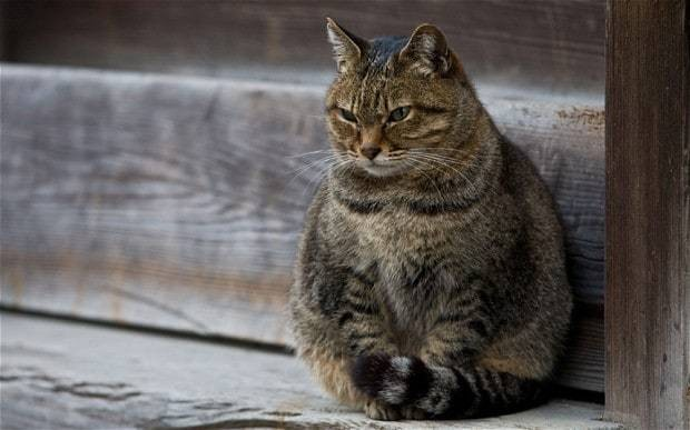 MPs denied cat over fears they might overfeed it