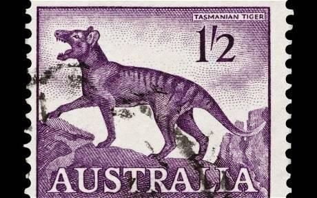 Tasmania: Hunting the fabled Tasmanian tiger