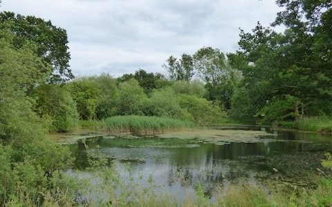 Seeds dormant for hundreds of years brought back to life with pond revival