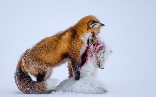 The 2015 Wildlife Photographer of the Year competition: The winning pictures
