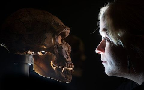 Neanderthals collected shells and could dive down 13 feet to get them, study finds