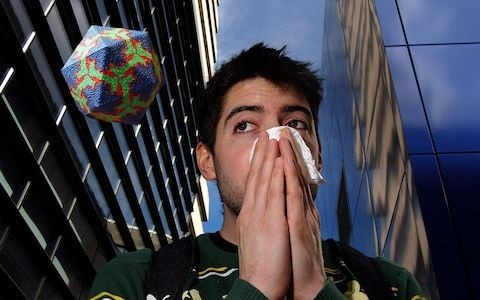 Why haven't we cured the common cold?