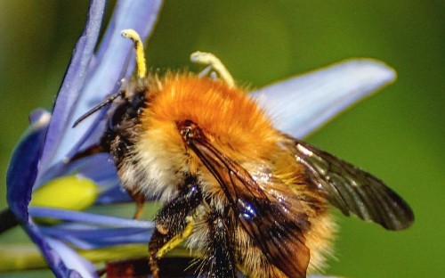 Bee-friendly flowers killing bees as they are full of pesticides, says expert