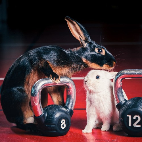 The Easter Gym Bunny workout
