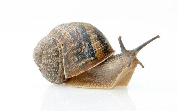 A fifth of gardeners throw snails and slugs into neighbour's garden