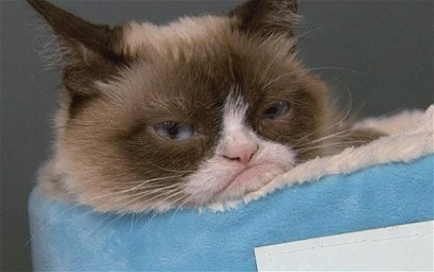 Grumpy cat makes owner £64 million