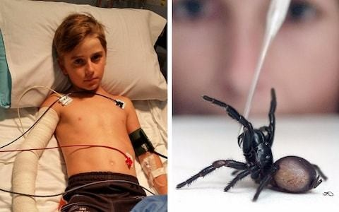 Boy, 10, bitten by world's deadliest spider in Australia, makes 'incredible' recovery after 12 vials of antivenom
