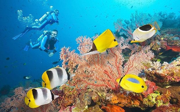 Natural History Museum creates 'virtual dive' to take you on trip to the world's most spectacular coral reefs