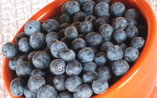 From preventing dementia to grey hair: why blueberries could be the best thing to ever happen to you