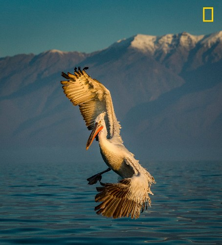 The best wildlife photography of the year (so far)