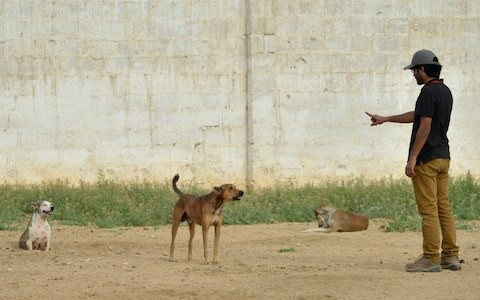 'Once rabies develops, there is no treatment': Pakistan's struggle to prevent ancient disease