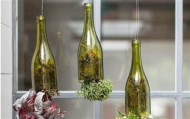 Indoor gardening: quirky ways to bring nature inside
