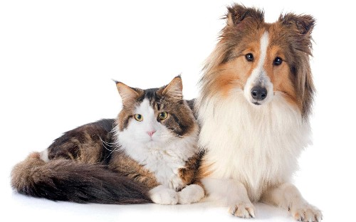 Pet Subjects: Telegraph vet Pete Wedderburn answers your questions