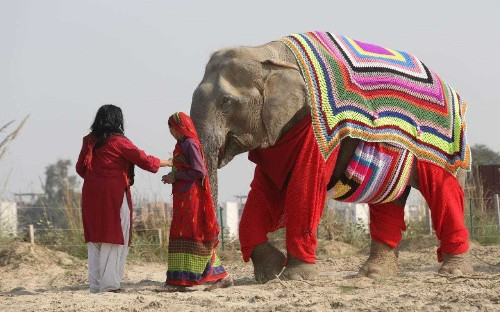 Rescue elephants receive jumbo jumpers knitted by kind villagers