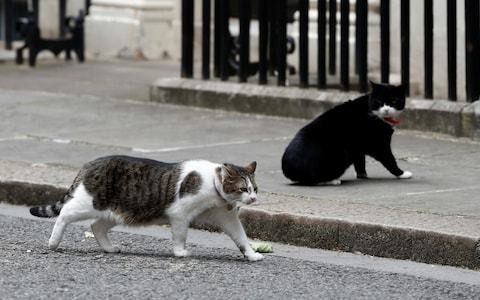 Tensions grow between Larry and Palmerston as UK in government limbo