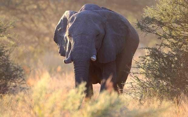 The Okavango Delta: Trip of a Lifetime