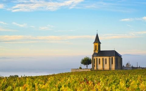 Burgundy or Bordeaux – which is better?