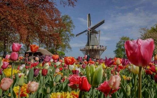Six events to combine with a Rhine or Danube cruise, from tulips in the spring to Oktoberfest