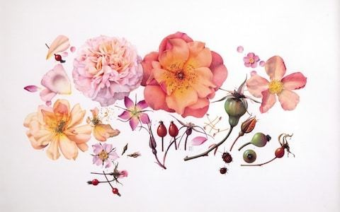 Botanical art: the celebrated Shirley Sherwood collection