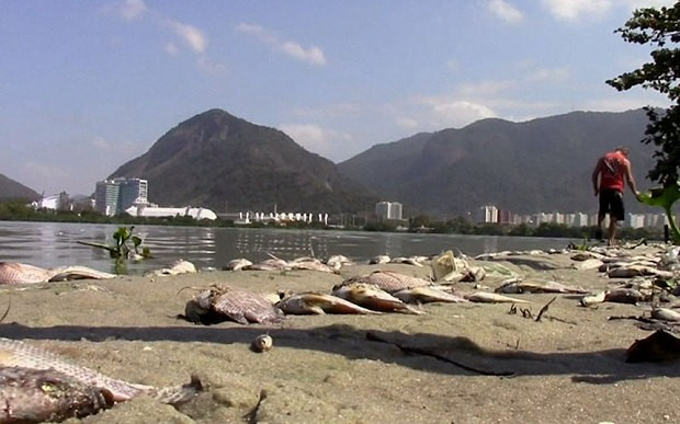 Thousands of fish wash ashore at Rio de Janeiro's Olympic park