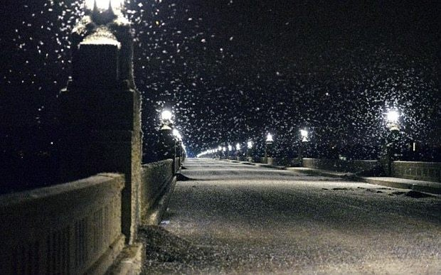 Swarming mayflies so dense they caused bridge closure and motorcycle crashes in US