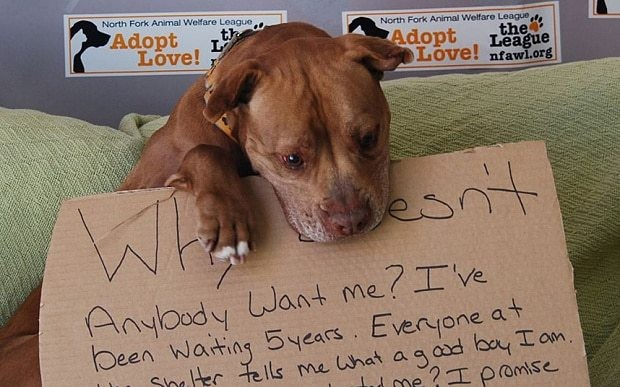 At last! Dog finds new home after five years in an animal shelter